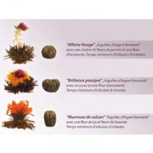 6 Fleurs de Thé Noir Abloom